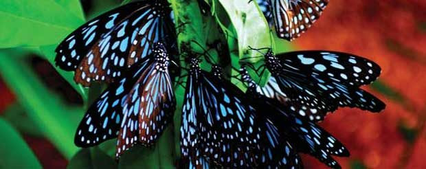 Say NO to Lawns, Yes to Butterflies