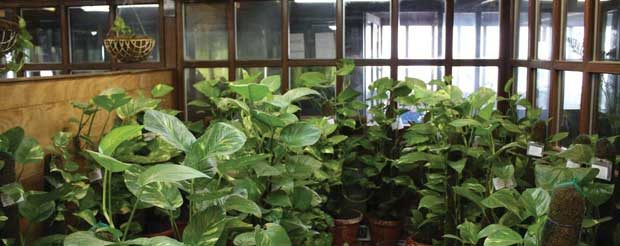 Bring Plants Inside Office, Up Productivity By 20%