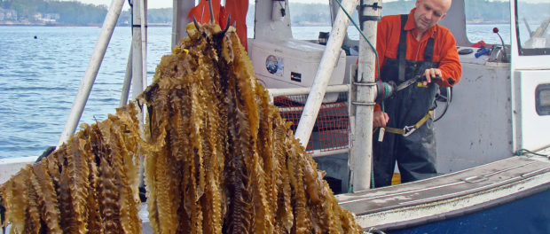 Ocean Farmer Wins Top Award