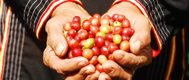 Coffee Can Be The First Completely Sustainably Sourced Commodity