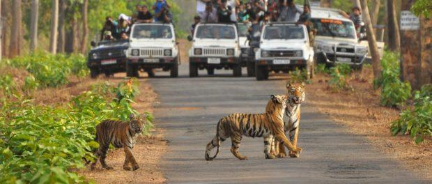 Eco-tourism Beyond Tigers?