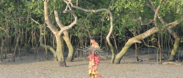 Livelihoods Carbon Fund Helps Revive Sundarbans